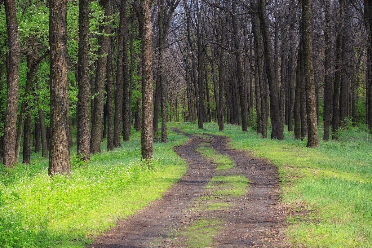 В весенний лес - Cергей Дмитриев