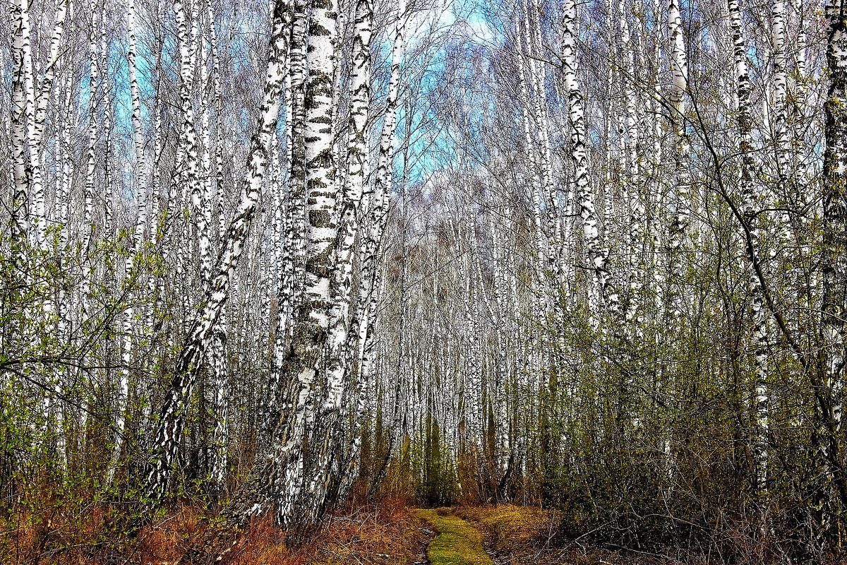 Весенний лес - Сергей Чиняев