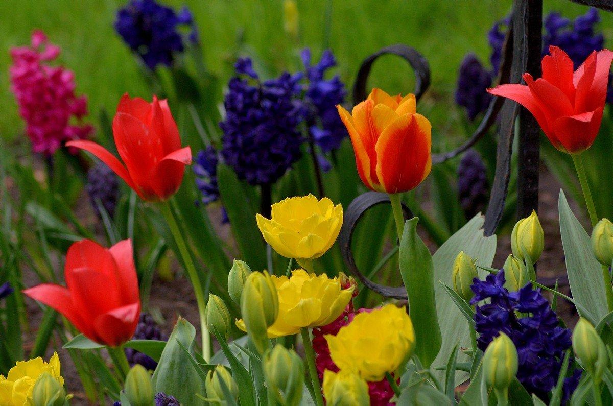 Весенний цветочный микс.. - Юрий Анипов