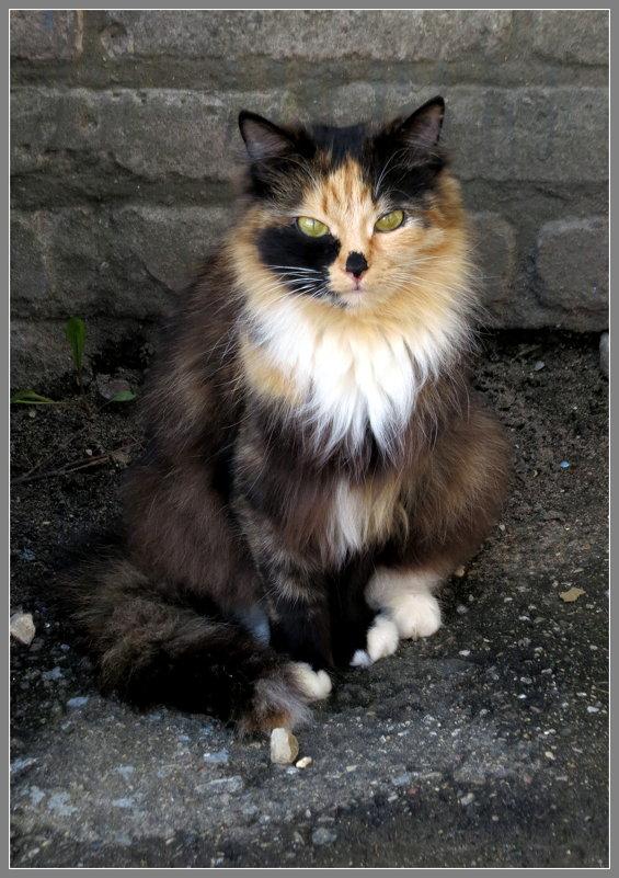 Кошка - Павел Галактионов