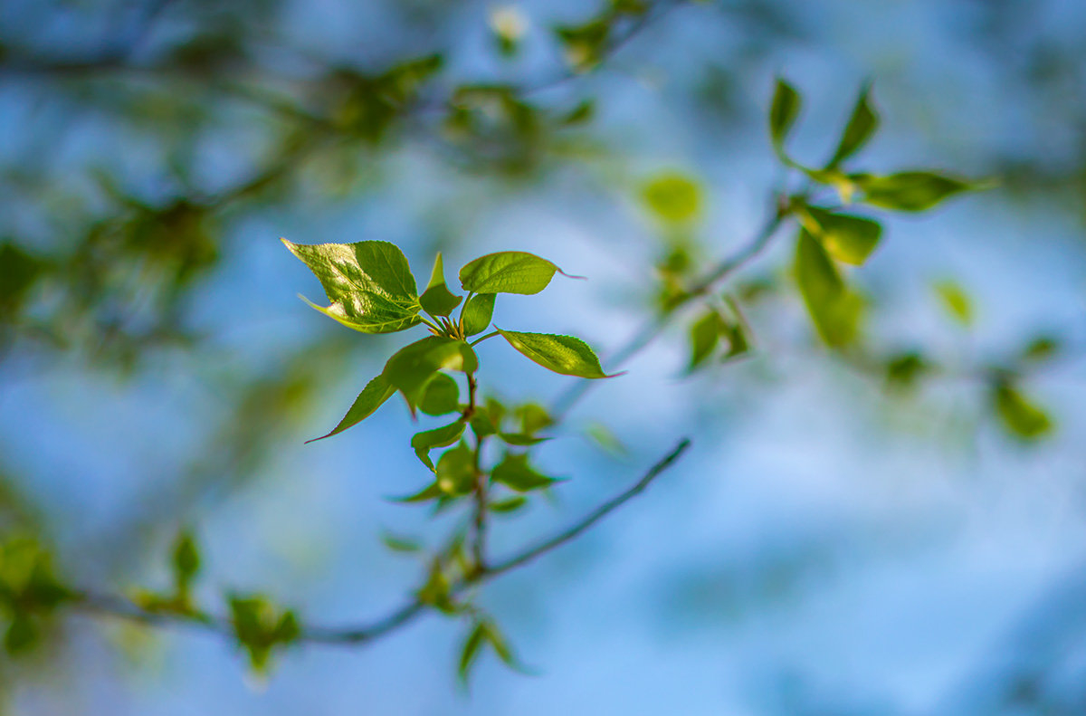 Краски весны - Игорь Герман