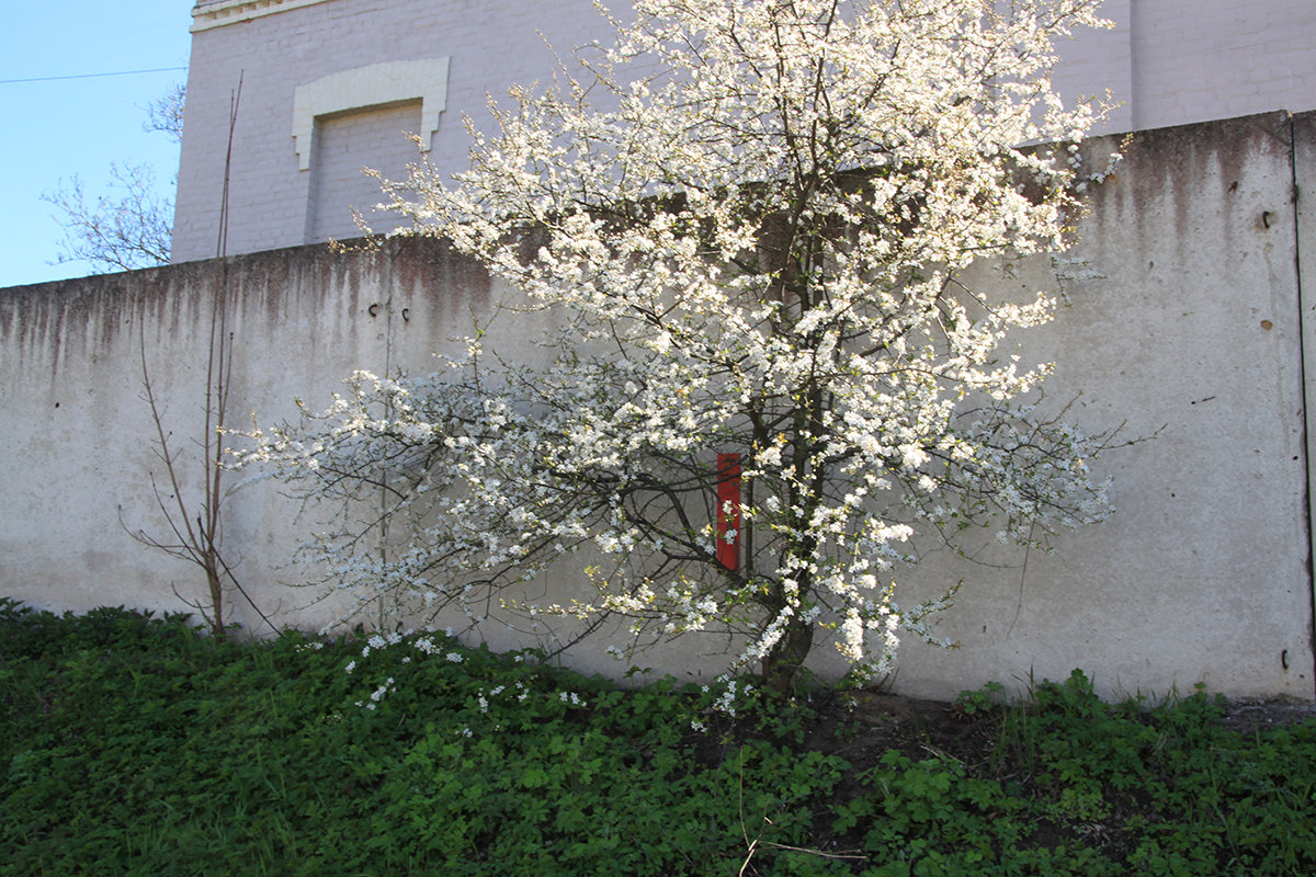 Рига в цветах - imants_leopolds žīgurs