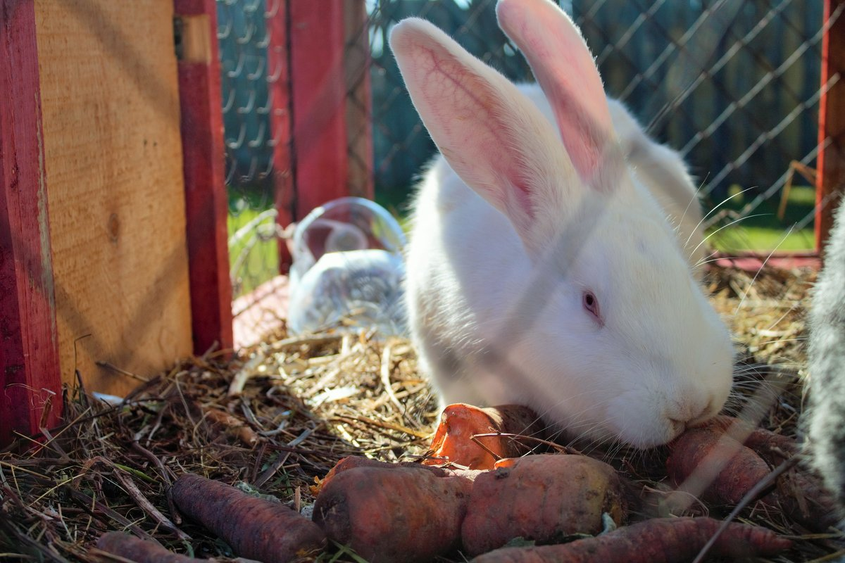 Кролик - Elena N