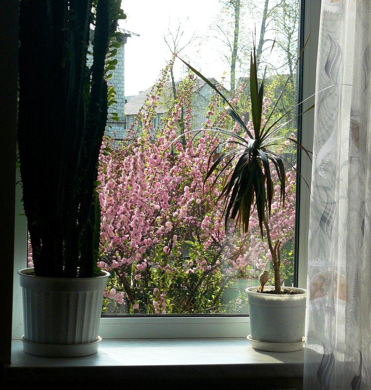 рацвела сакура под окном - Леонид Натапов