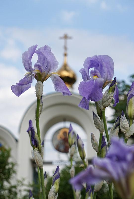 Христос воскрес - Андрей Майоров