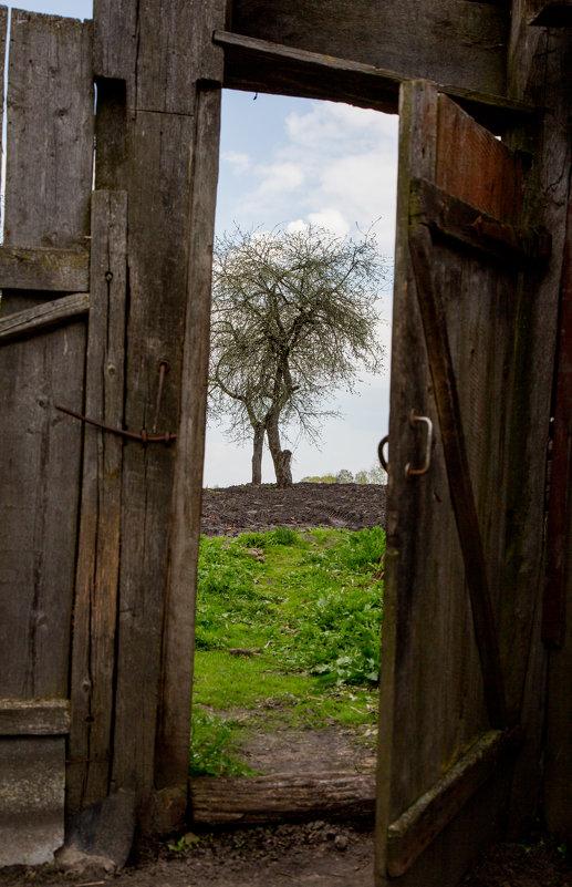 Сельский пейзаж - Elena Moskina