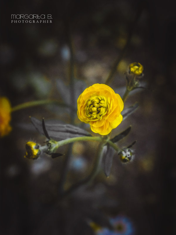 Краски весны - Маргарита Б.