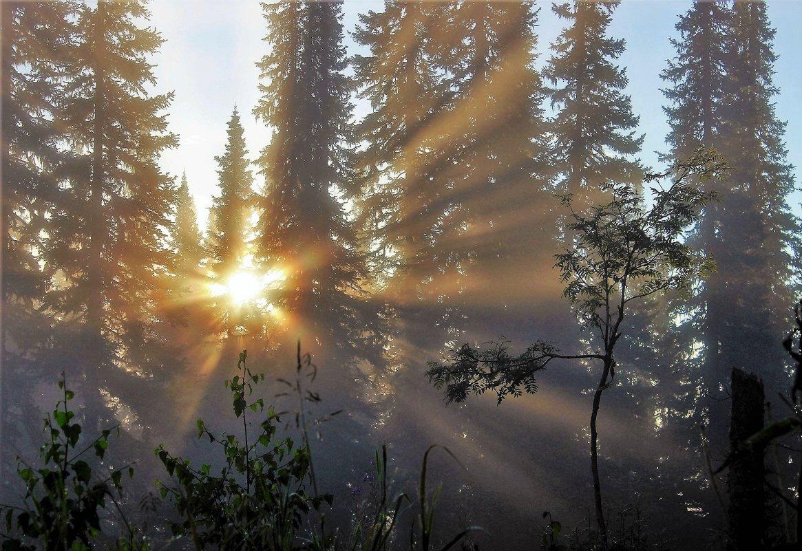Утро в пихтаче - Сергей Чиняев