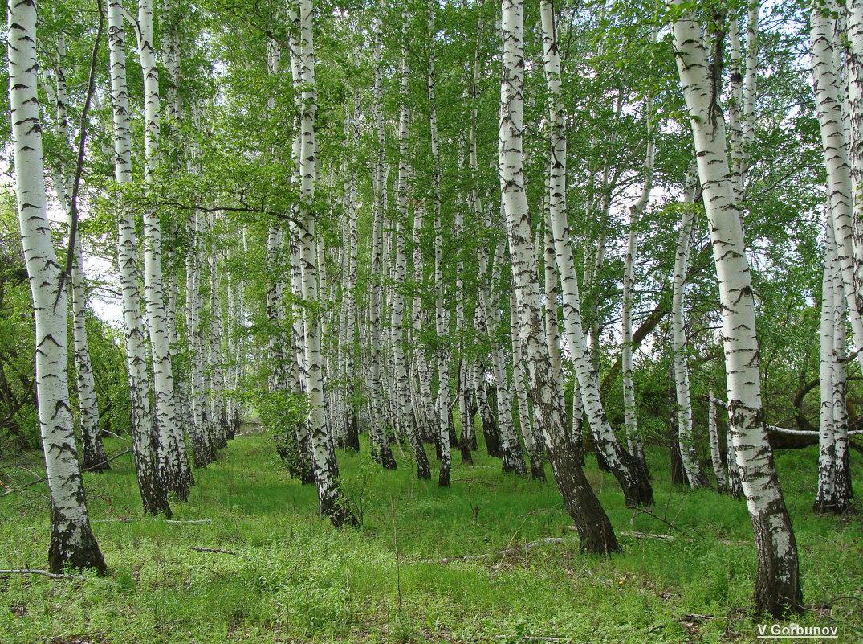 Я в весеннем лесу ... - Владимир Горбунов