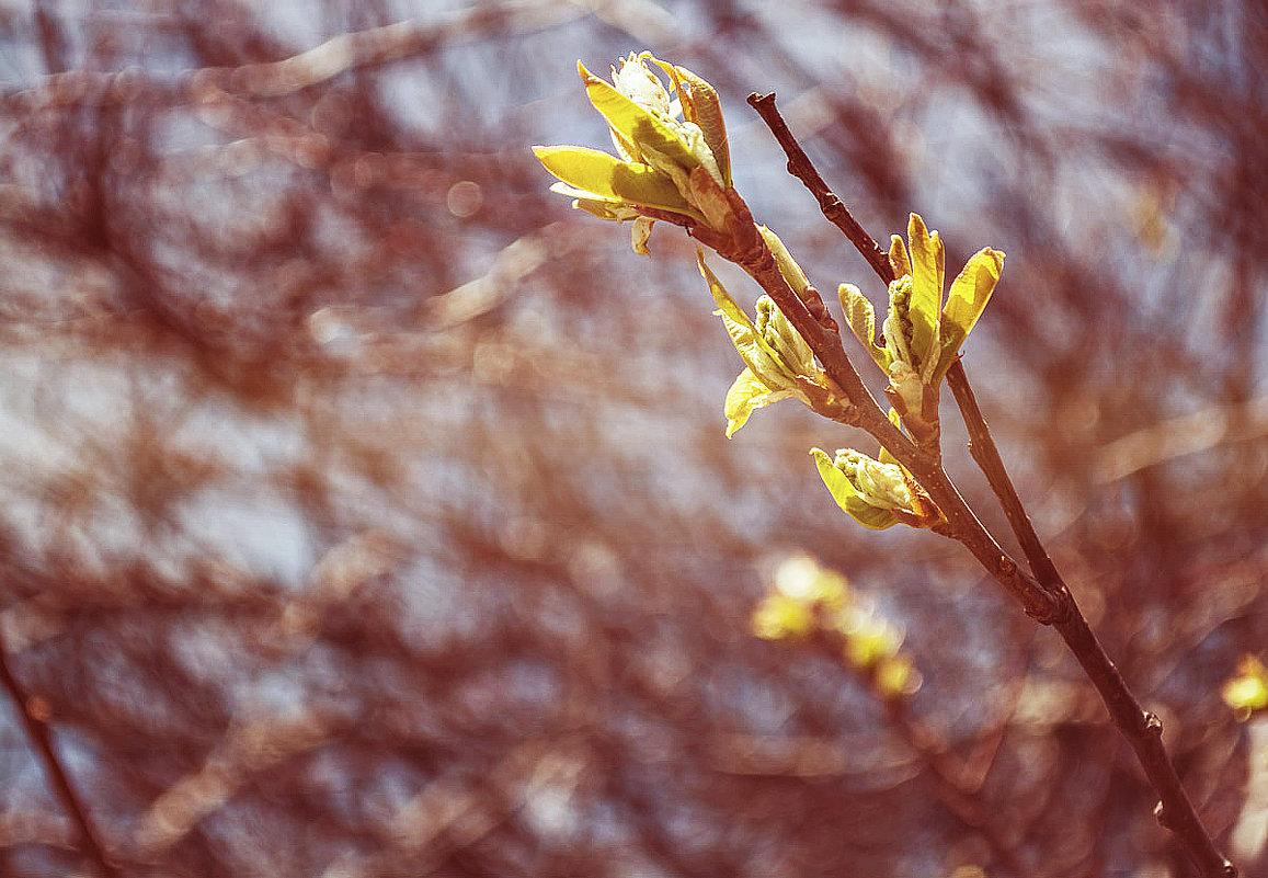 В Сибири весна еще только начинается.. - Светлана