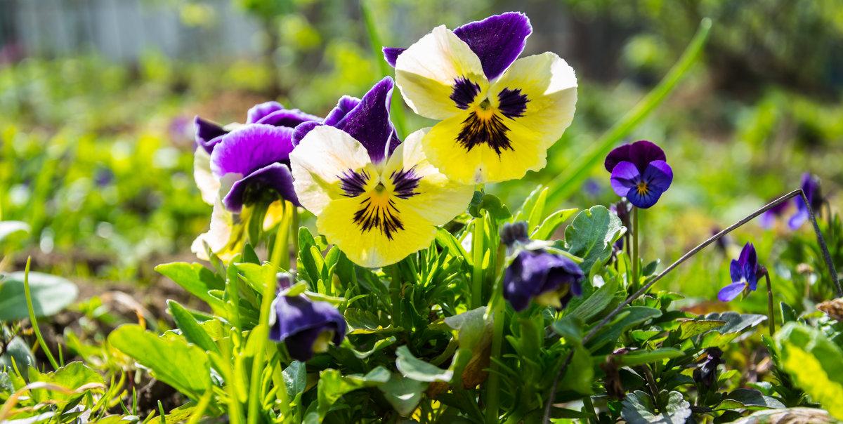 Цветы - Kasatkin Vladislav