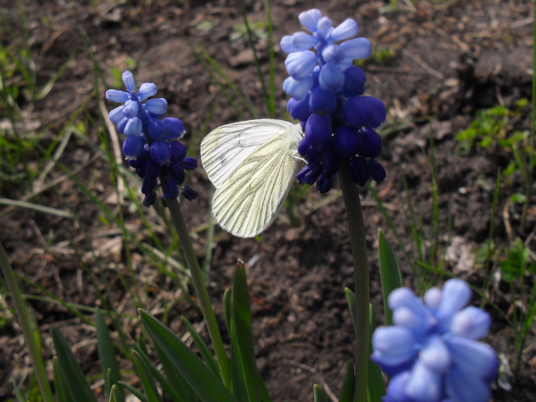 Бабочка - Анатолий