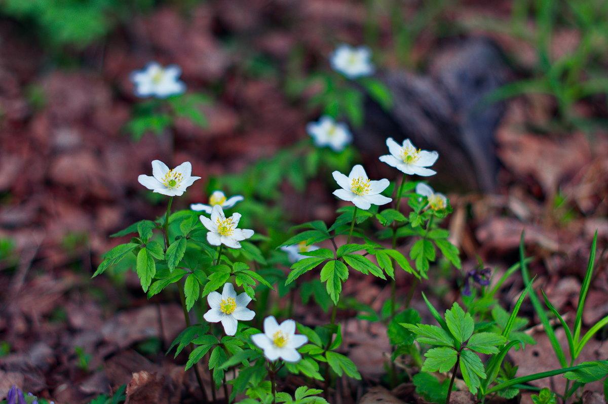Цветы весны - Андрей Куприянов