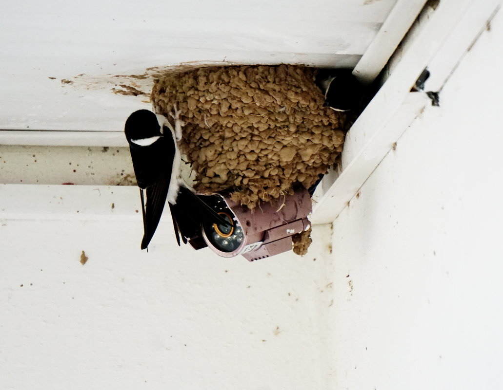 Ласточкино гнездо. - Murat Bukaev