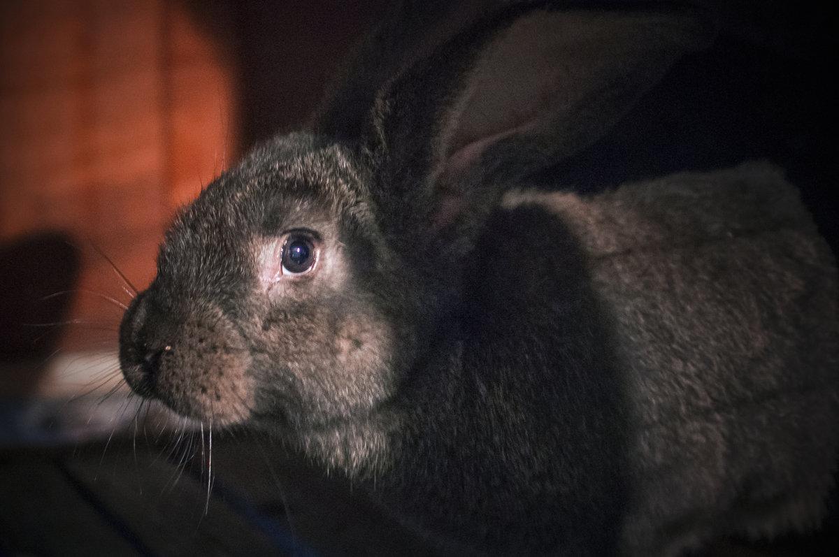 Кролик - Георгий Морозов