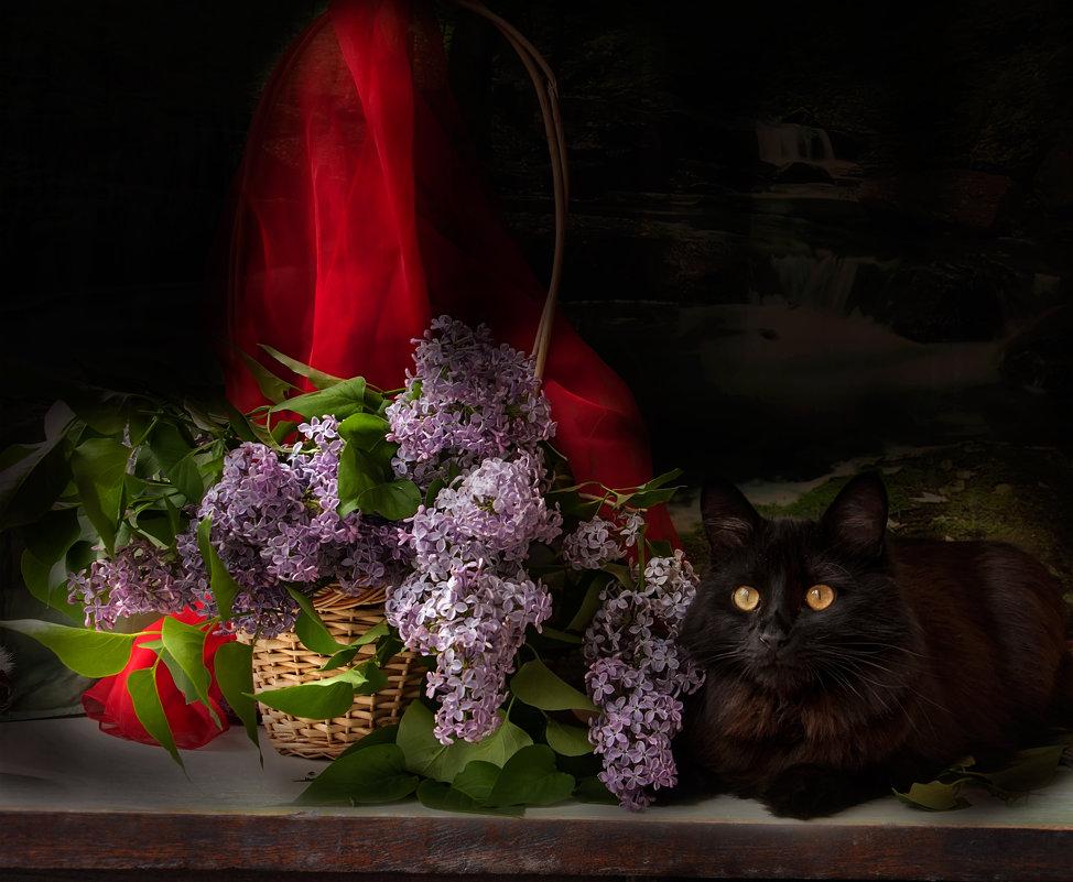 Котик в сирени - Виктория Колпакова