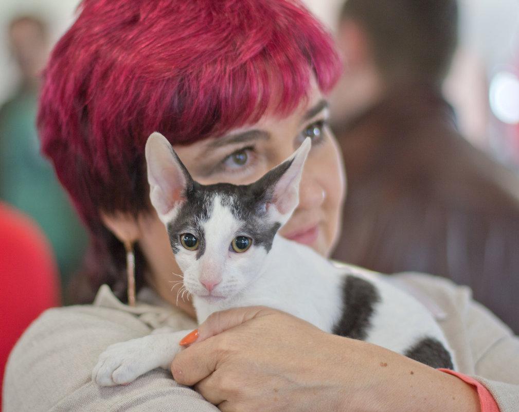 на выставке кошек - Светлана З