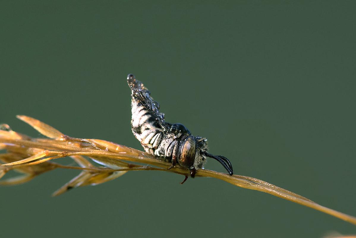 Утро пчелиное - Александр Земляной