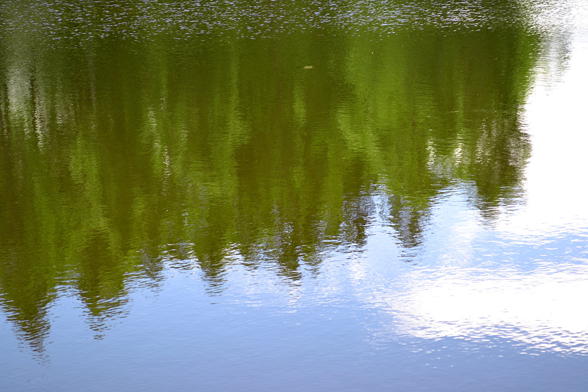 отражение - Светлана