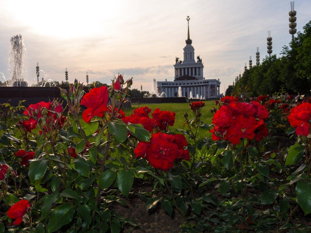 Розы, которые не нужно красить. - Pavel Stolyar