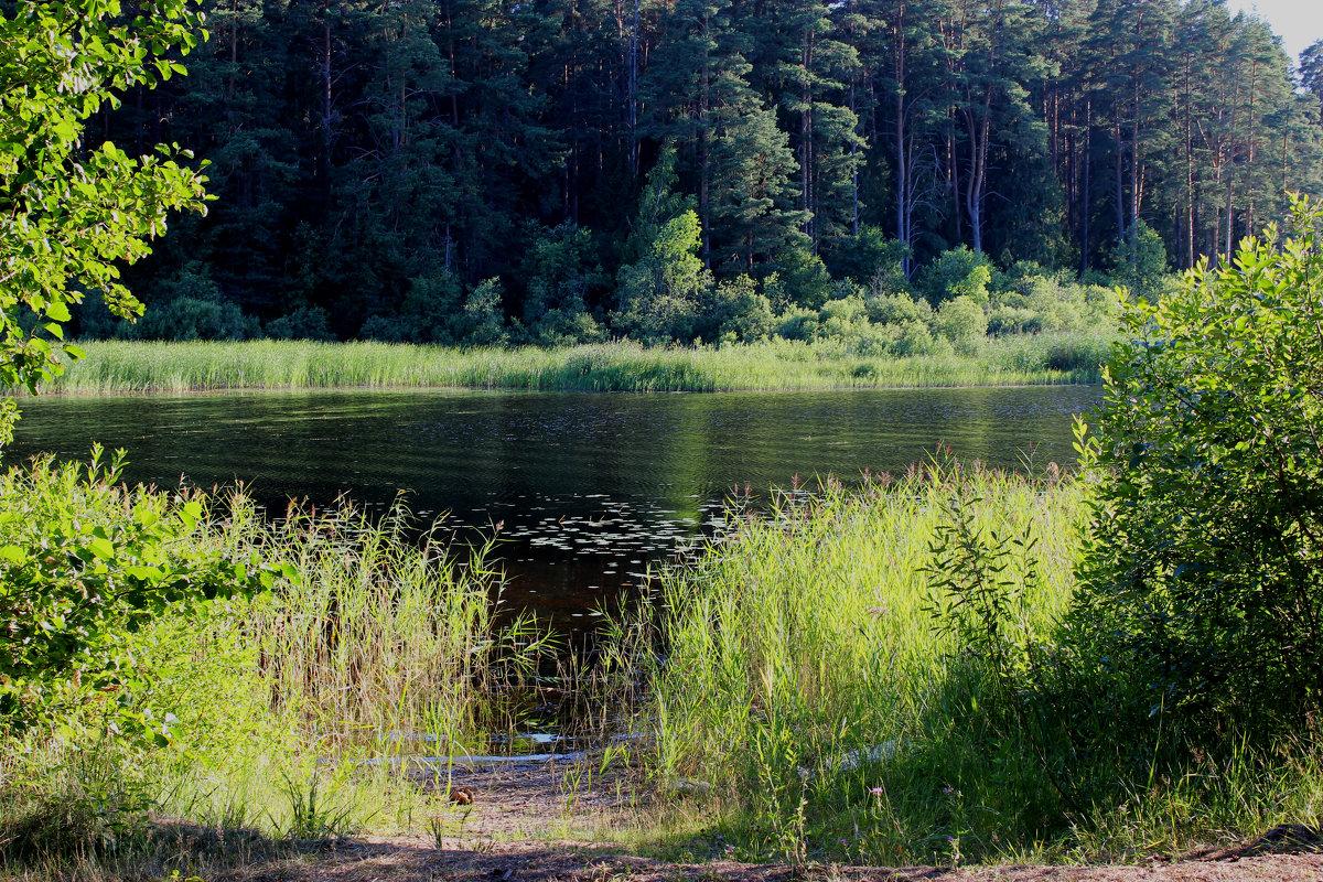 озеро перхово рыбалка фото и видео