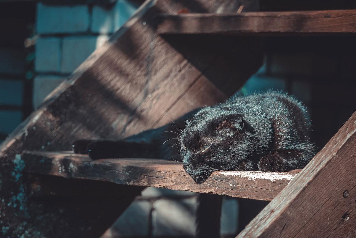кот на ступеньке - Ольга Перевалова