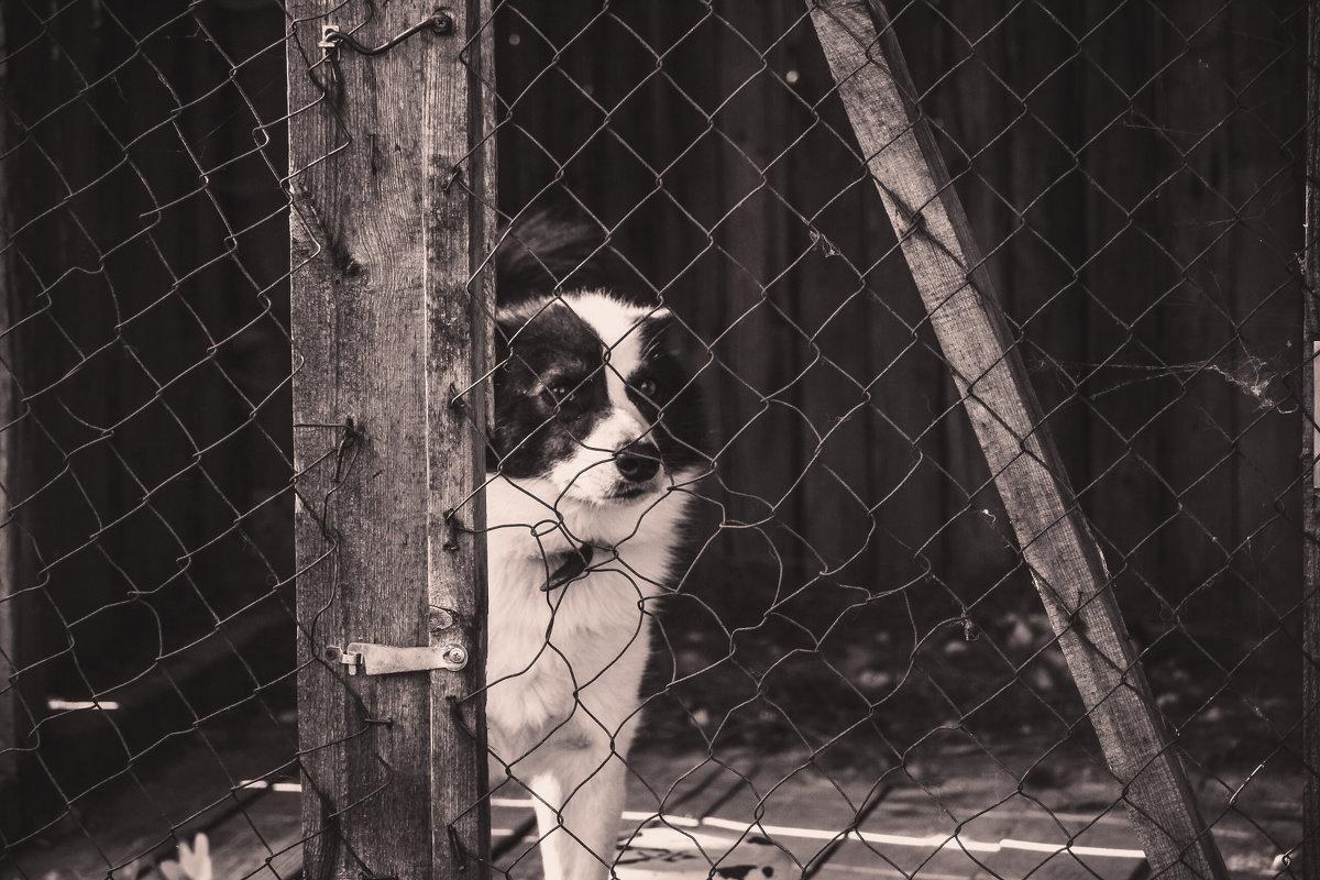 Выпусти меня... - Ольга Перевалова