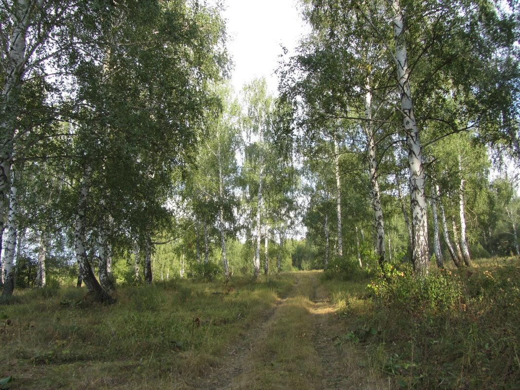 Дорога в лесу - Yasnji