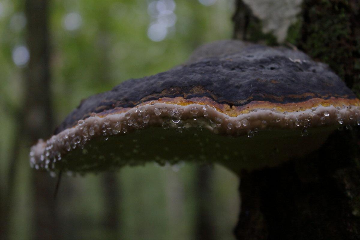 лес - andrew585 585