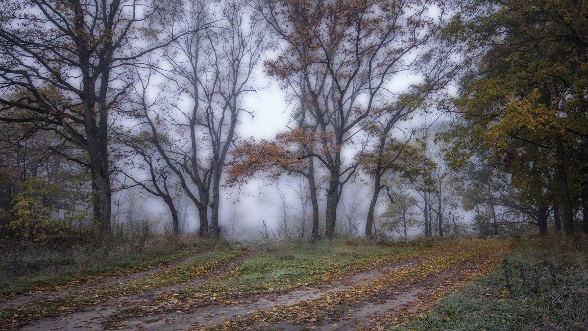 Туманное утро в дубовом лесу - Дубовцев Евгений