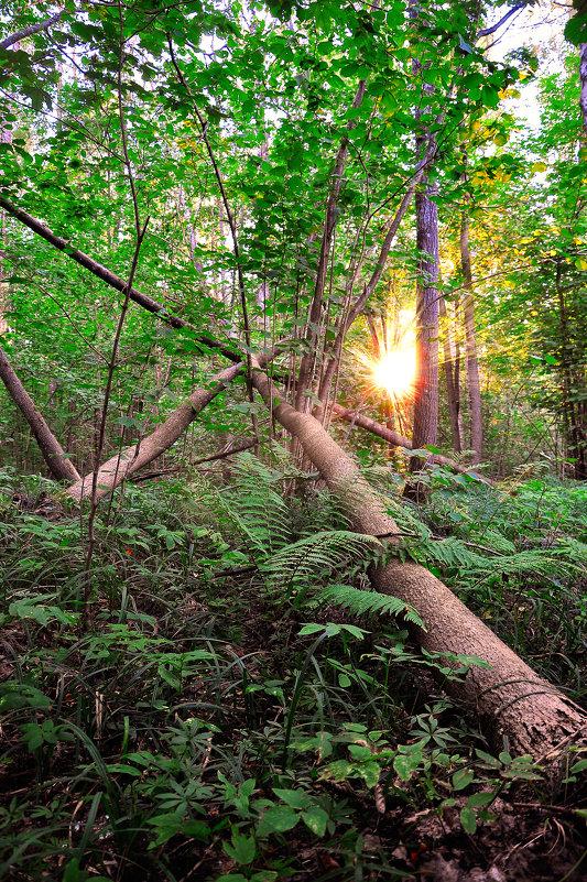 Брянский лес - Артем Тимофеев