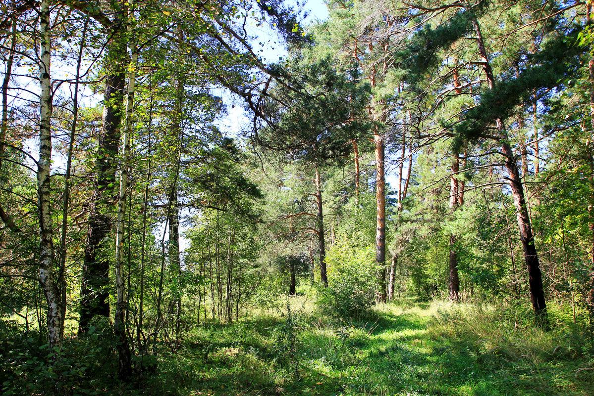 В лесу. - Иван