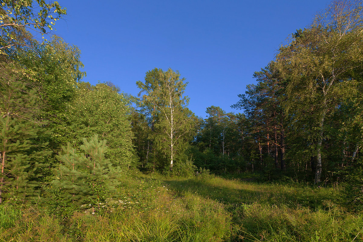 Лесной уголок - Анатолий Иргл