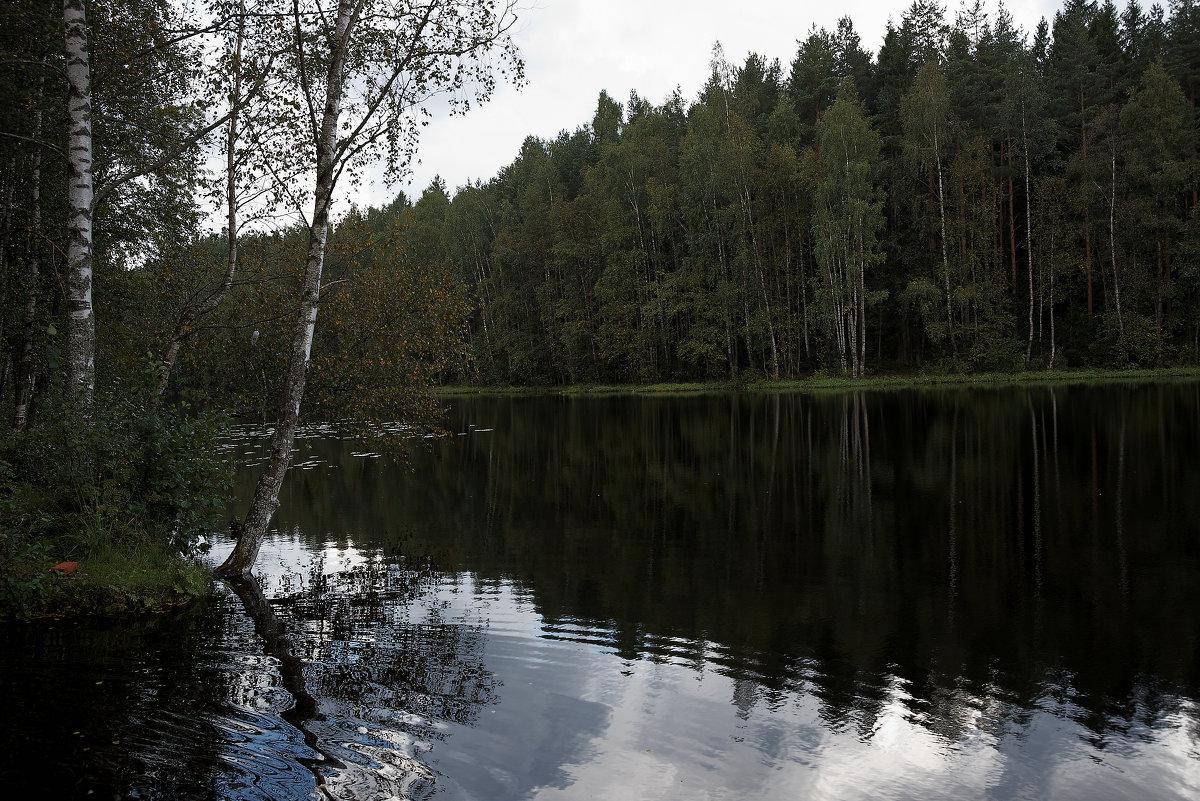 лесное озеро - Владимир