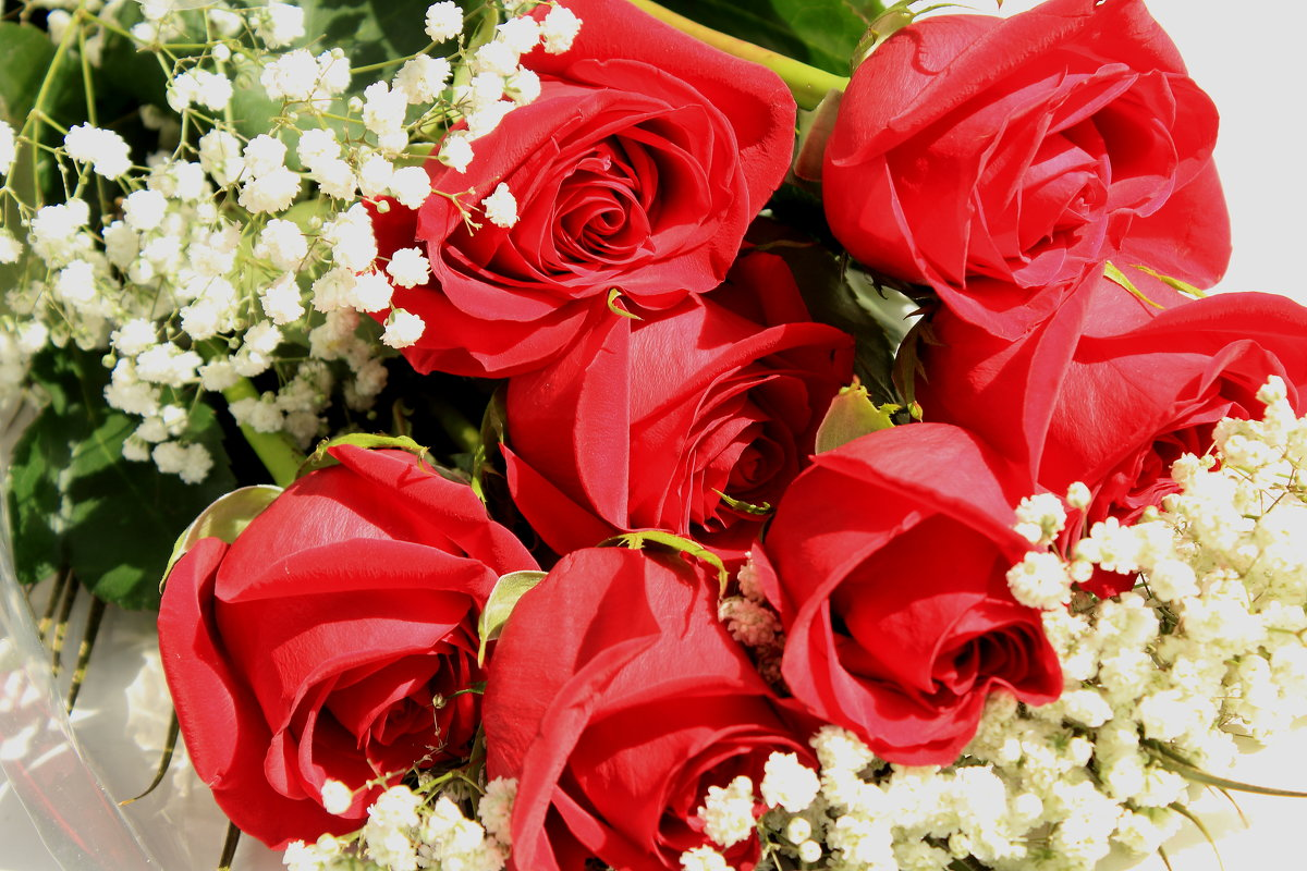Букет роз - ольга