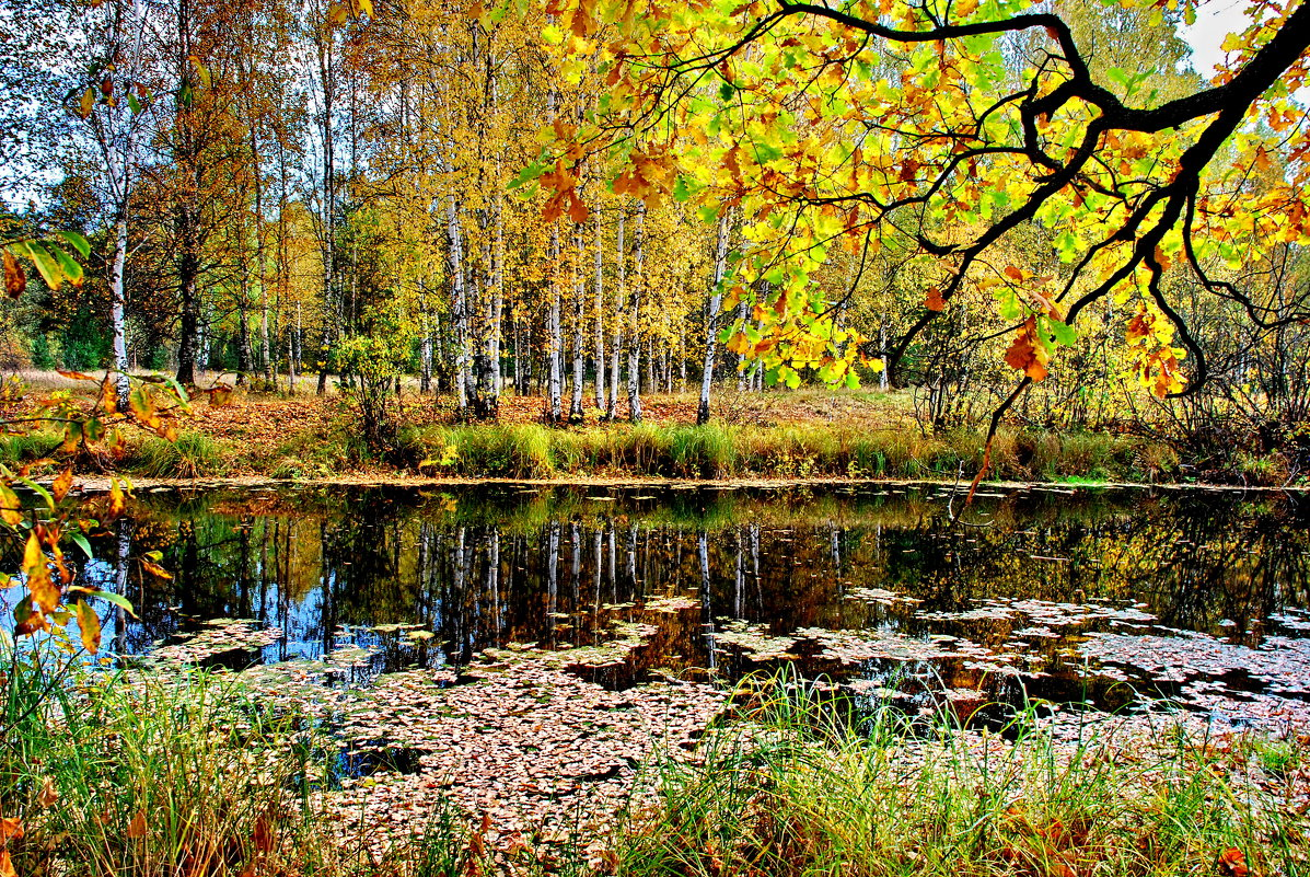 Золотая осень - Валерий Толмачев
