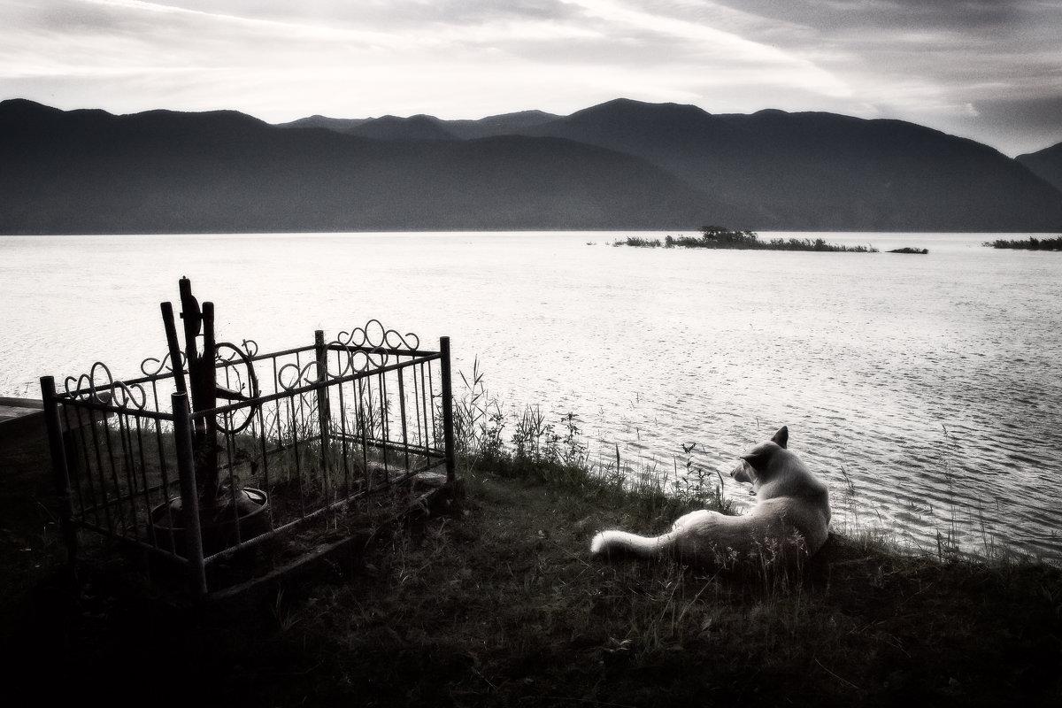 Пёс. - Slava Sh