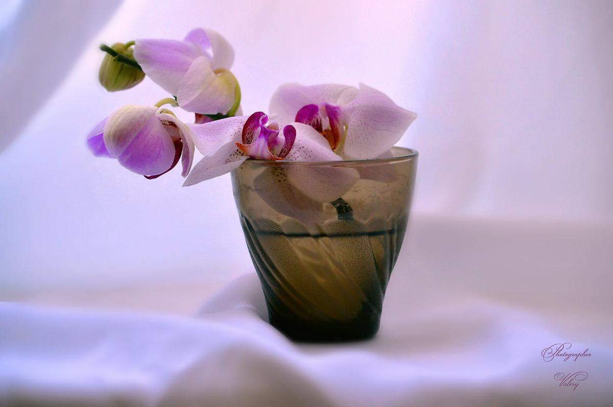 Орхидея - Валерий Лазарев