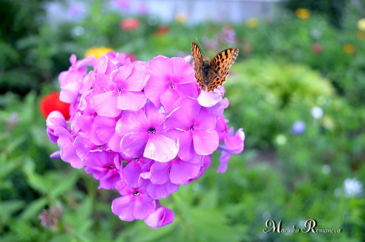 Бабочка на цветке - Марина Романова