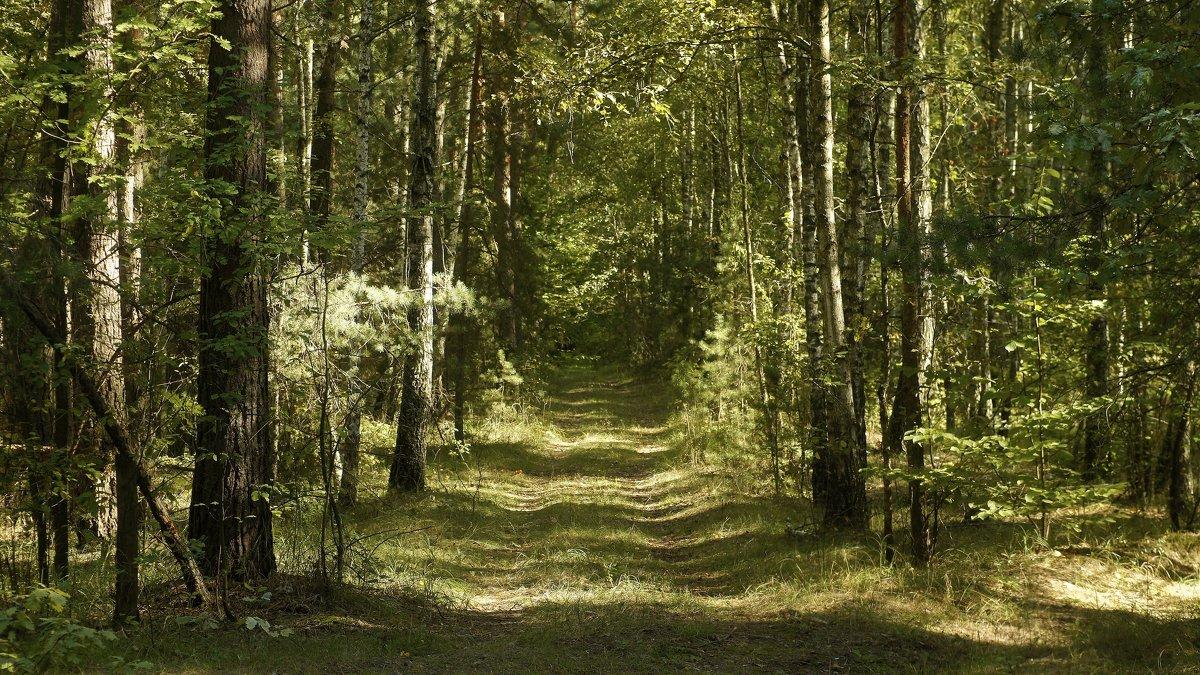 Августовские лесные аллеи ... - Игорь Малахов