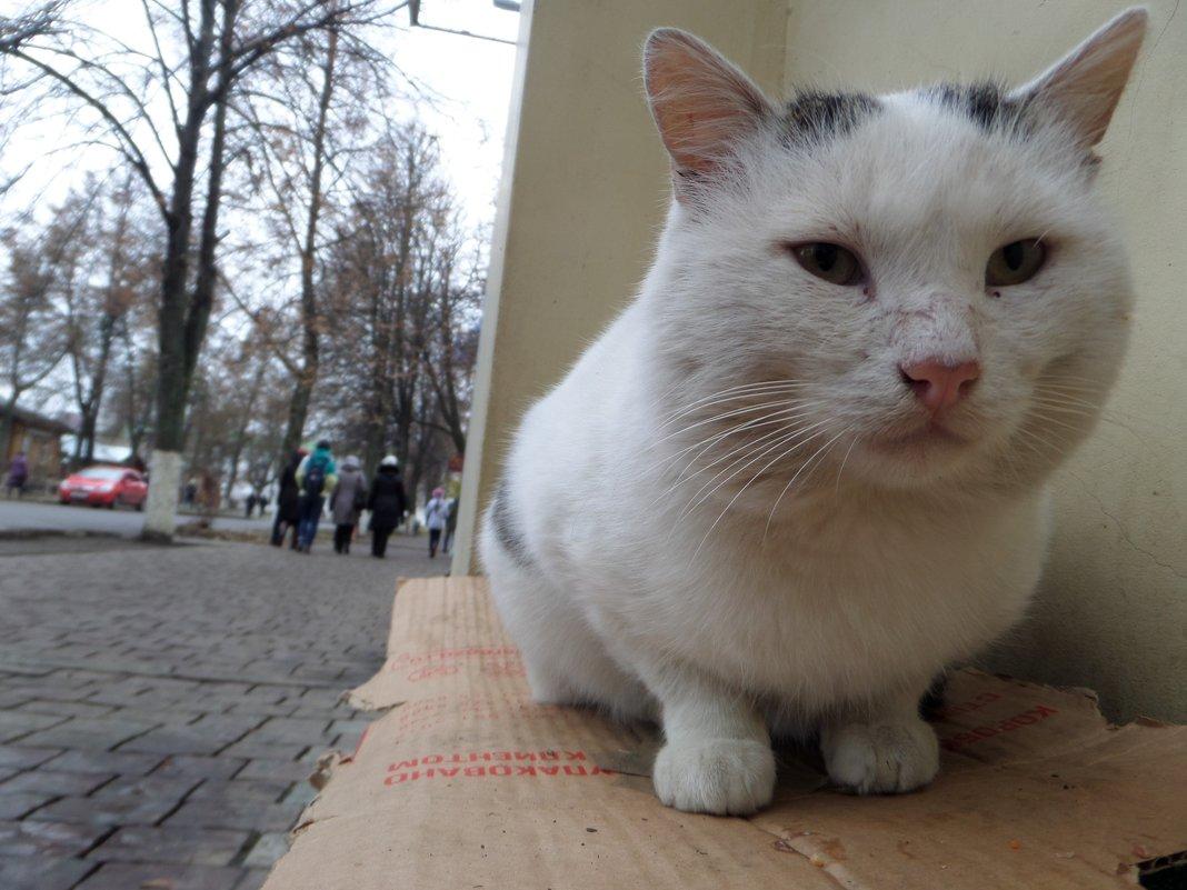 Уличный мурлыка кот - Татьяна