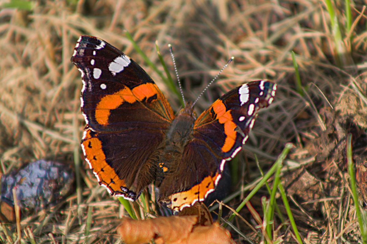 бабочка и чернослив - Виктор _