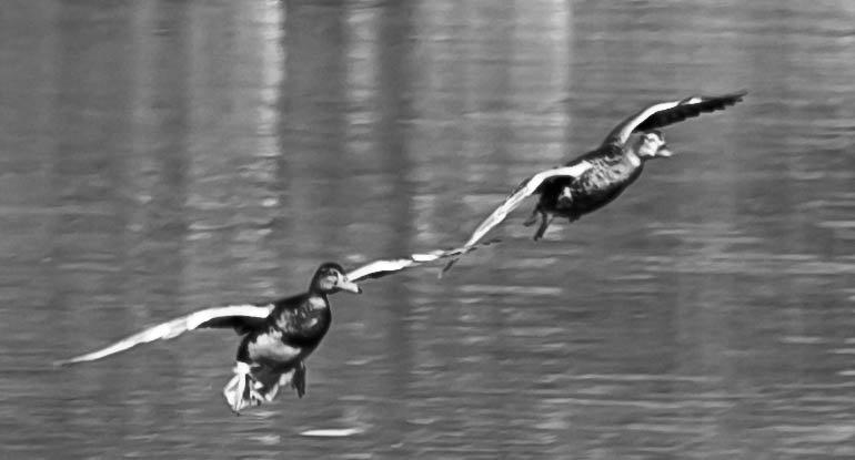 крыло о крыло ...вместе в полете... - Svetlana AS