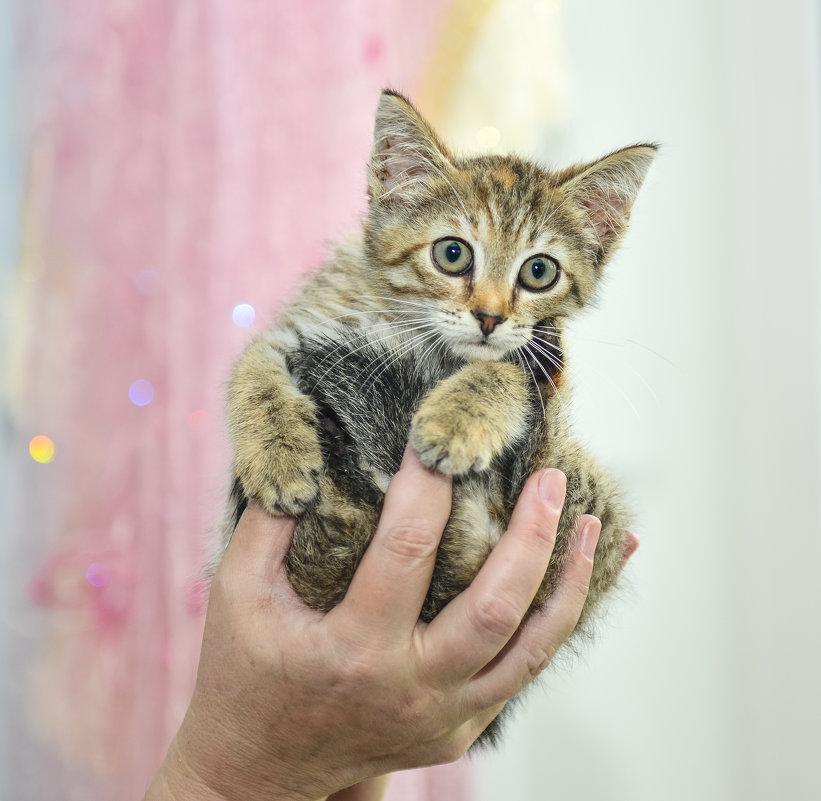 Кошачье-тигриного племени ребёнок... - Алёна Михеева