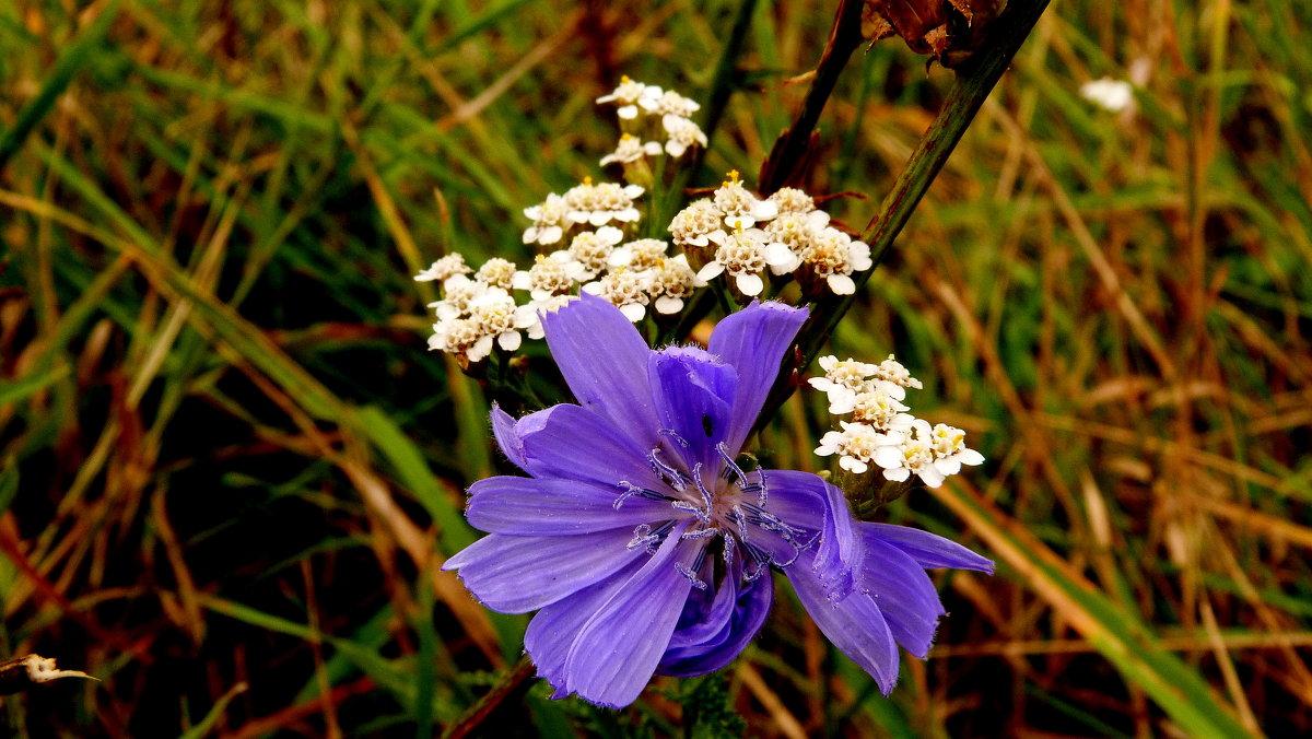 луговые цветы - Александр Прокудин