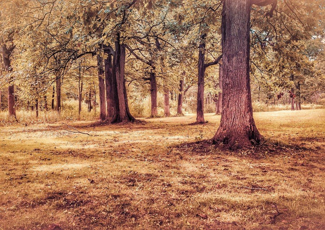 В.лесу. - Gene Brumer