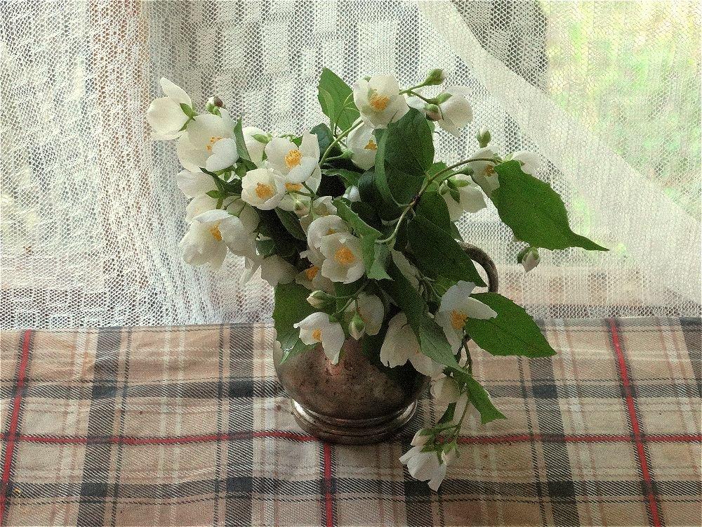 Ветка жасмина для запаха - Светлана Лысенко