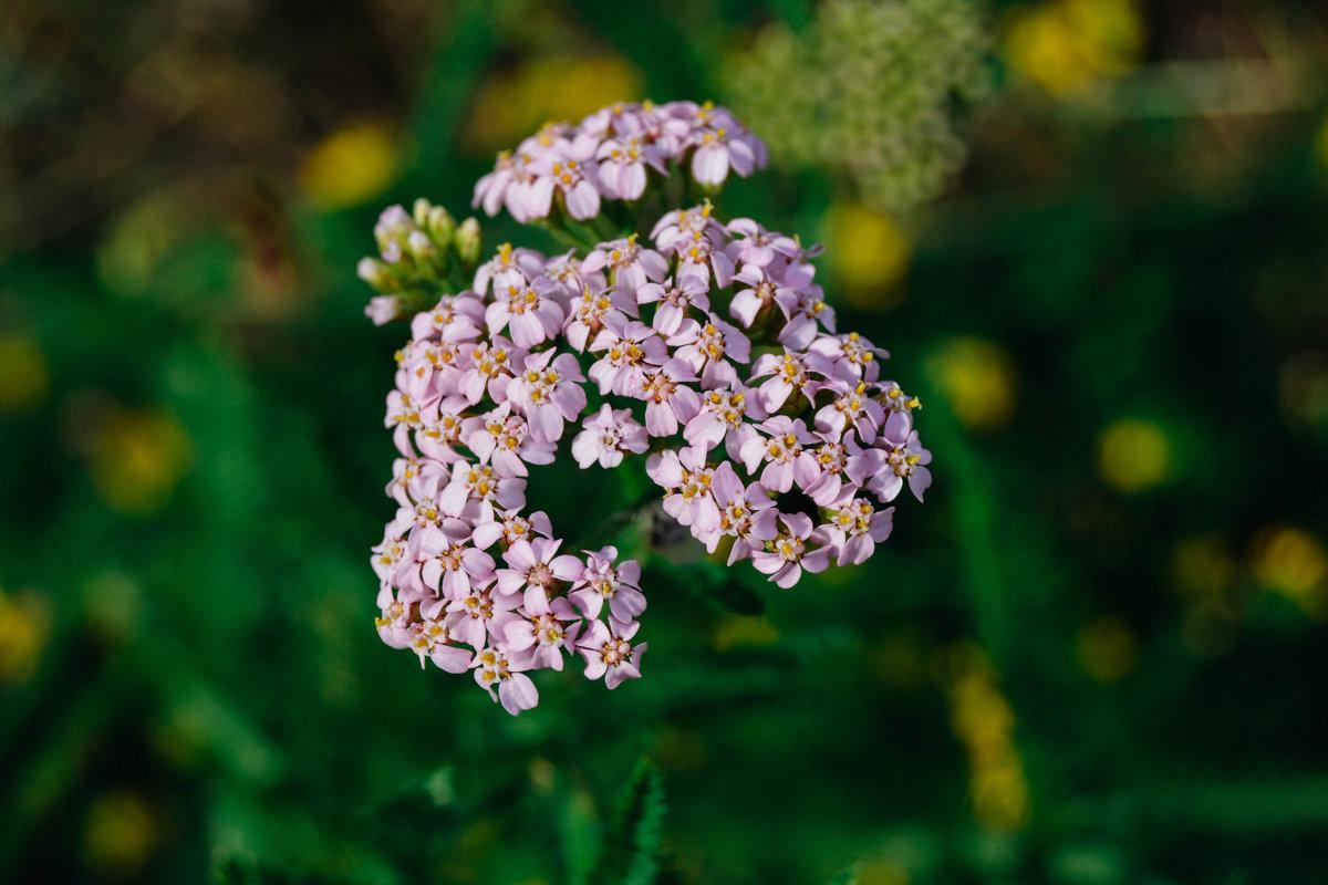 сиреневые цветочки - Света Кондрашова