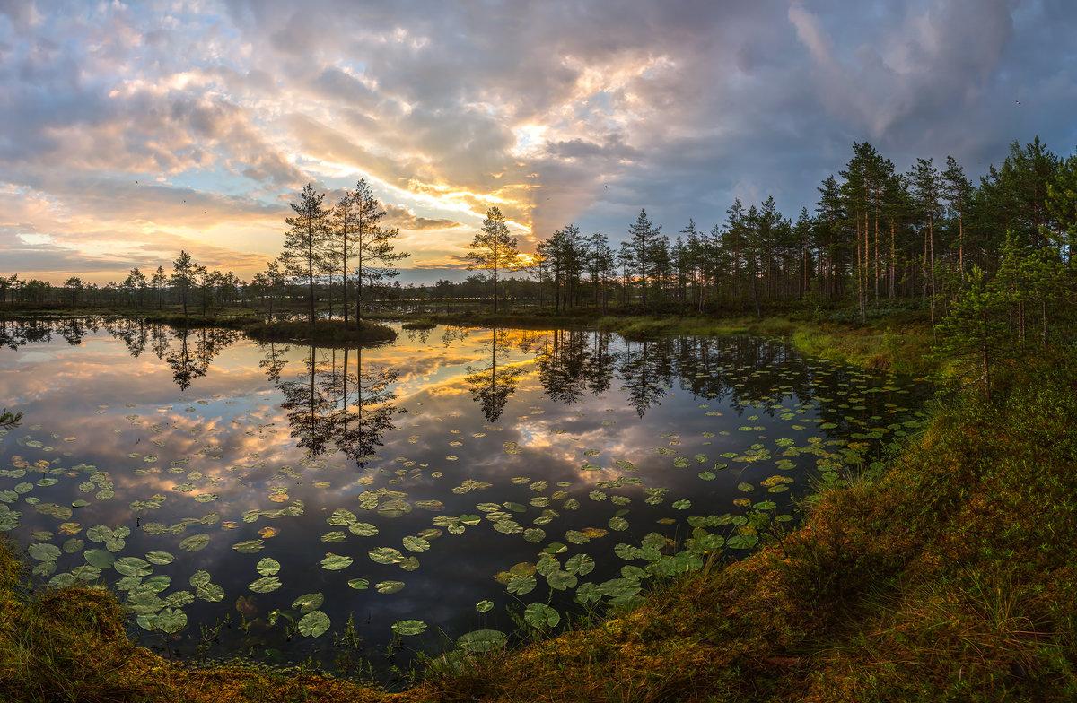 Листья кувшинок в озёрной бухте - Фёдор. Лашков