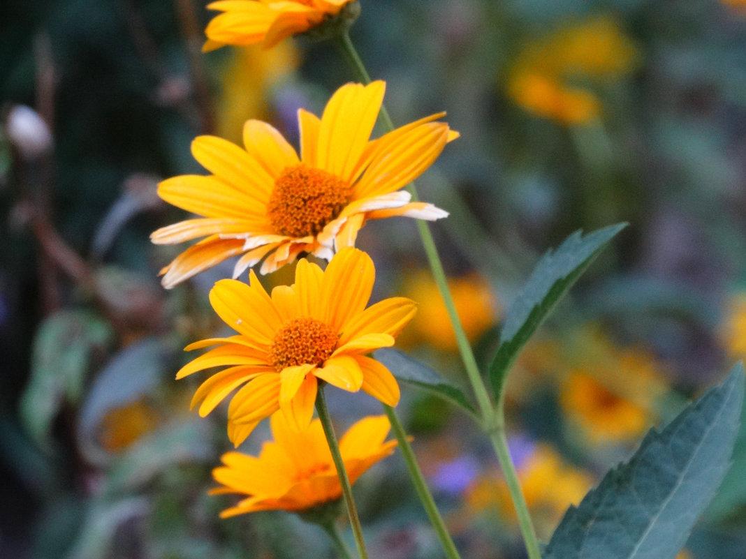 Август,вечер,цветы... - Тамара (st.tamara)